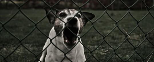 Overcoming dog on dog aggression