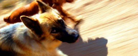 Dogtrax dog walking