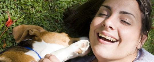 Be assertive around your dog