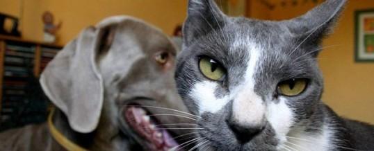 Cat vs dog ownership